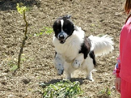 Benji..il cane più felice del mondo