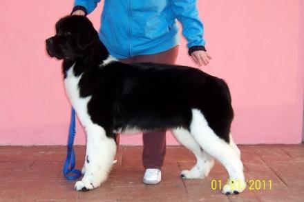 Kiro a 9 mesi