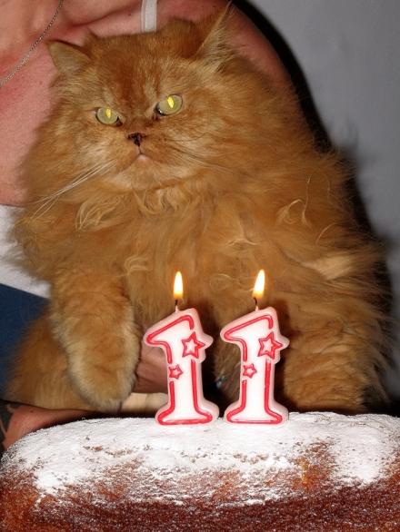 Compleanno di Piccolo