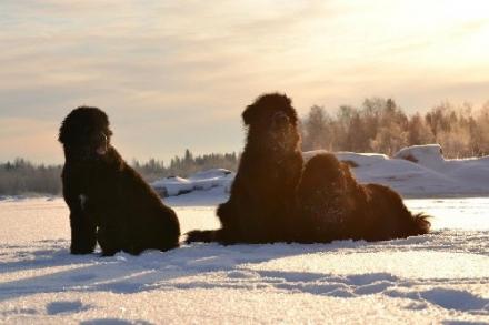 Finlandia - Eleonoora, Rina e Aapo