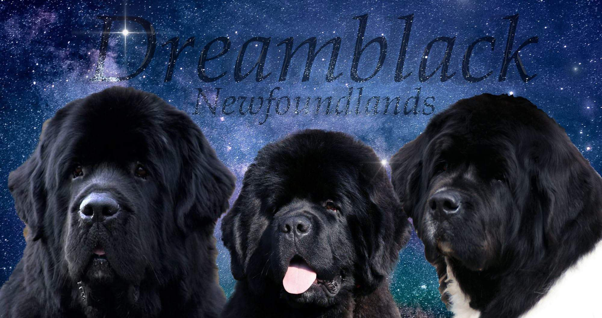 dreamblacknewf